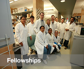 Fellowships Program Link
